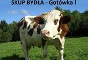 Skup BYDŁA - Gotówka !