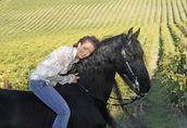 piękne Frisian konia, dobrze wyszkolony do przyjęcia (Nalia