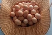 Jajka Lęgowe Kury Tęczówki Czernichowskiej