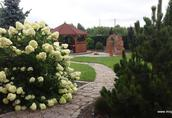 Usługi ogrodnicze Zgierz, Ozorków,Aleksandrów Łódzki, Łódź, woj, łódzkie 13
