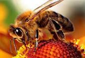 Okłady pszczelarskie na 2016 r.