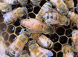 Ule Sprzedam odkłady pszczele na ramkach