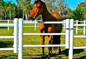 Equisafe - ogrodzenia elektryczne dla koni, pastuch, HDPE 2