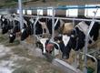 Pozostałe zwierzęta hodowlane Zapraszamy do współpracy z naszym