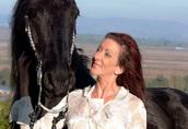 Śliczne czarne konie fryzyjskie Mężczyzna jest dostępna 1