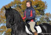 Śliczne czarne konie fryzyjskie Mężczyzna jest dostępna 2