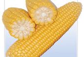 Sprzedam otrebie kukurydziane