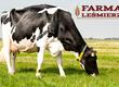 Jałówki Gospodarstwo Rolne w Leśmierzu