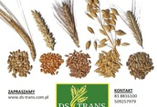 Skup zbóż - własny odbiór - konkurencyjne ceny