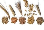 Skup zbóż - własny odbiór