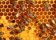 Pozostałe pszczelarstwo Sprzedam miód wielokwiatowy z w