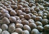 Rzepak Kupię: pszenicę, żyto, pszenżyto, owies, jęczmie...