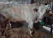 Na ubój zakupię zwierzęta u rolnika w gospodarstwie