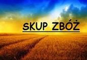 Żyto Kupię zboża paszowe, jakościowe i ekologiczne. P...