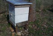 sprzedam rodziny pszczele z ulami