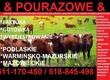 Krowy na ubój skup bydla nienadajascego sie do