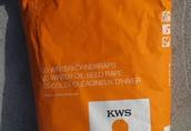 Rzepak nasiona Shelock KWS