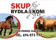 Byki na ubój Skup bydła rzeźnego oraz transport