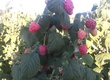 Warzywa sadzonki malin polka, laszka, glen