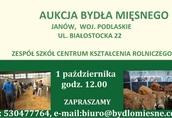 Cielaki i opasy 1.10 odbędzie się aukcja bydła mięsnego w Janowie...