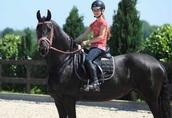 dobrze wyszkolony koń fryzyjski, piękna klacz