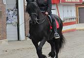Koń czystej rasy fryzyjskiej klacz (Christie) Zakup 2