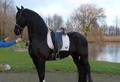 Fryzyjski Koń