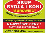 Skup Bydła SUROWIEC