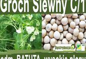 Kwalifikowane nasiona grochu siewnego BATUTA C/1