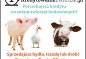 AGROKREDYT Kredyt dla rolnika,kredyt dla rolników,Leasing