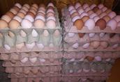 Jajka Jaja białe Wiejskie Nioski Kury Swieże Smaczne Swojskie