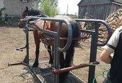 podkuwanie koni - ortopedia 4