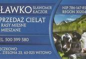 nowa dostawa cielęta byczki
