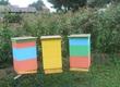 Dom i ogród W związku z prośbą pszczelarzy