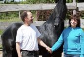 Koń na sprzedaż, Czarna piękna klacz