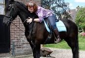 Koń fryzyjski na sprzedaż, dostępny teraz 1