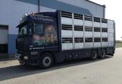 Transport żywca, krowy, cielaki, jałówki