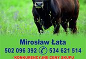 Skup Bydła Mirosław Łata