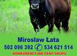 Byki na ubój Skup bydła Mirosław Łata Skupujemy