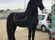 Klacze Dobrze wyszkolona piękna końska