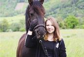 Czarny koń fryzyjski na sprzedaż