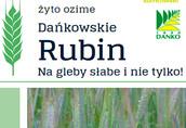 Kwalifikowane nasiona siewne żyto ozime Dańkowskie Rubin, Diament