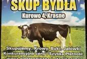 Skup Bydła Sławomir Rydlewicz