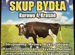 Krowy na ubój SKUP BYDŁA : krowy, byki, ja