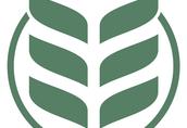 Owies ekologiczny BINGO C1