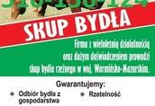 Skup Bydła Warmińsko-mazurskie