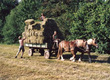 Siano Zajmujemy się produkcją sianka