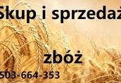 Kupię rzepak kukurydze jeczmien i inne zboza