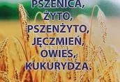 rzepak, pszenice, żyto kukurydze, , jęczmień, owies, pszenżyto