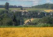 Gospodarstwa rolne Ukraina. Stada krow, owiec, koz 4 zl/kg w cenie...